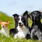 Rehabilitacja kotów i psów