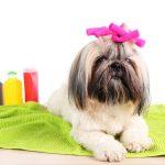 Usługi groomera: kąpiel, strzyżenie, czesanie oraz trymowanie psów i kotów